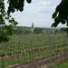 Винодельческий туризм